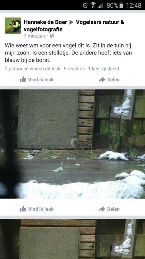 facebook rk nachtegaal